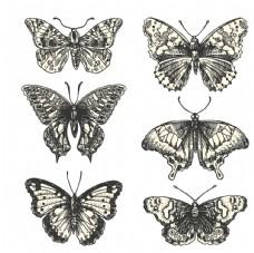 蝴蝶标本黑白