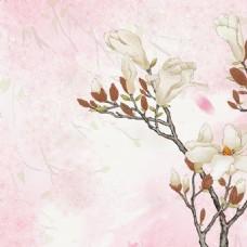 粉色淡雅木兰花化妆品清新海报背景素材