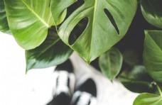 绿色树叶背景素材