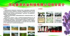 农村企业农产品展示