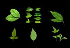 清新绿叶设计元素