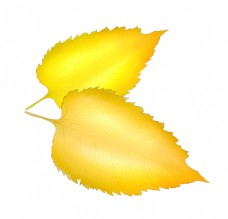 秋天黄色树叶插图