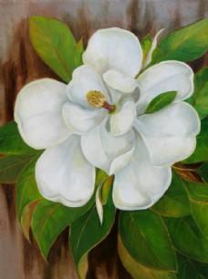 油画白色花朵