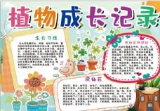 植物成长小报