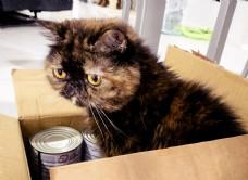 躲在盒子里的加菲猫