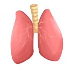 心肝肺脾肾器官插画
