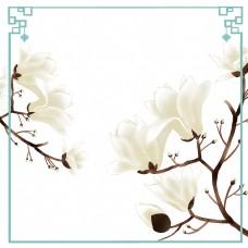 木兰树花卉望春花旱荷花早春花卉边框