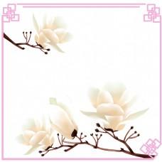 荷花木兰树望春花旱荷花早春花卉边框