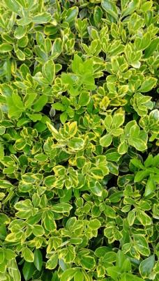 春天植物新芽图片