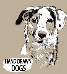 写实线描卡通狗
