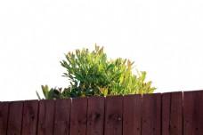 围栏  摄影 自然 自然景观