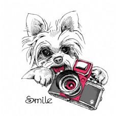 可爱狗狗和照相机