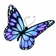 蓝色的蝴蝶装饰插画