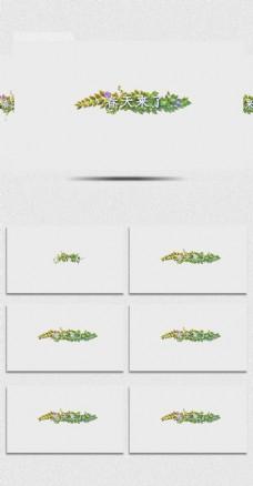 春天植物生长的小清新AE模板