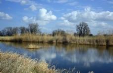 河道景观芦苇蓝天白云草8k图