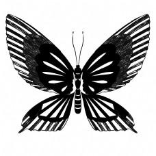 昆虫蝴蝶纹身插画
