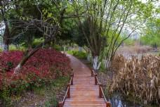 林间小桥商用摄影