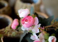 粉色小花模型特写