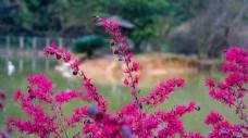 红色枝叶小花摄影