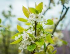 白色小花枝叶摄影
