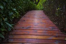 公园木板小路商用摄影