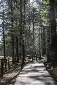茂密的古树森林自然风景20