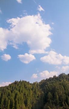蓝色天空树木森林海报