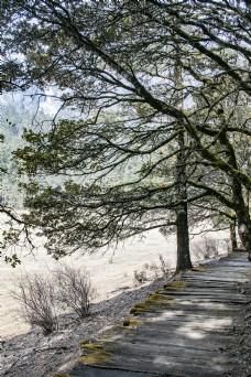 茂密的古树森林自然风景25