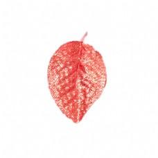橘黄色植物叶子下载