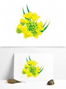 手绘含苞待放的油菜花花蕊