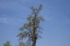 静物摄影之枯藤的老树