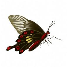 黑红色蝴蝶装饰插画