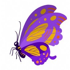 大翅膀昆虫蝴蝶插画