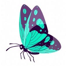 蓝色的昆虫蝴蝶插画