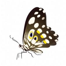 黑黄色蝴蝶装饰插画