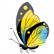 黄色的昆虫蝴蝶插画