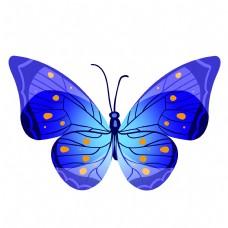 天蓝色昆虫蝴蝶插画
