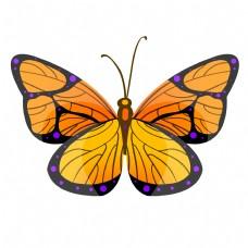 橙黄色的昆虫蝴蝶插画