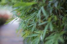 竹林之商用摄影1