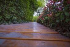 竹林与小路的商用摄影