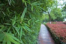 竹林与小路的结合商用摄影