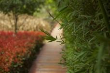 小路上生长出来的竹叶