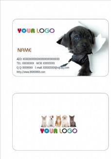 宠物店名片
