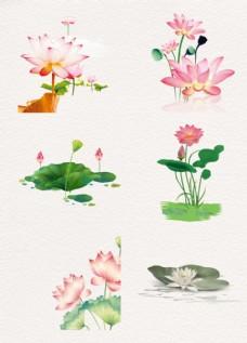 水彩花卉 荷花