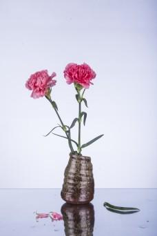 粉色康乃馨摄影图
