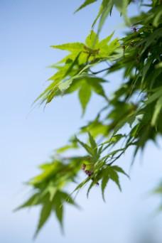 春天生机盎然的绿色树叶