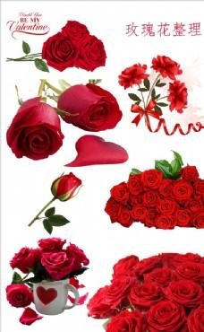 玫瑰花素材
