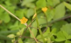 黄色的花朵特写照片