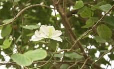 白色的花朵特写摄影图