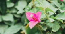 粉色的花朵特写摄影